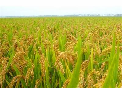 改造盐碱地 保护农业发展(案例)--土流网
