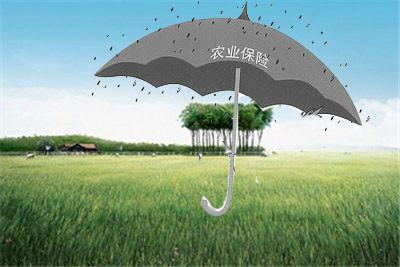 在农村兴办企业后何以参加以保管?--土流动网