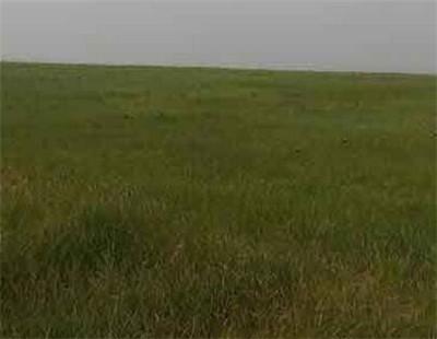 草地农业里的滚烫商机:种草也能赚翻天