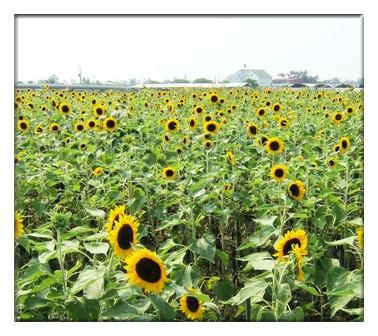 台湾休闲农业