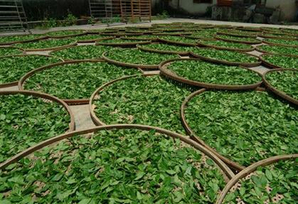 安溪铁观音茶的价格标准由哪些因素决定?