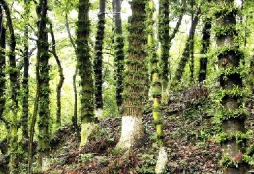 林下仿野生种植模式 石斛种树上一点不简单