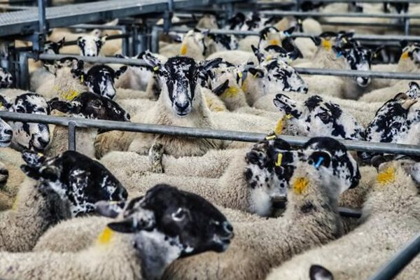养猪有啥补贴政策?未来五年养殖业大势及机遇