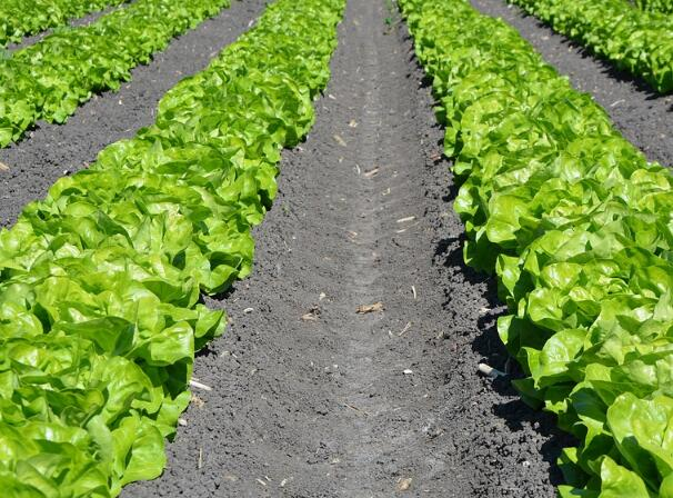 2017农业部关于推进农业供给侧结构性改革的