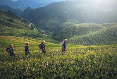 河南省财政大力推动农民工返乡创业