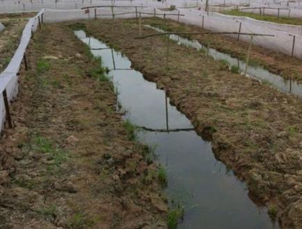 青蛙养殖有什么作用?发展前景如何?青蛙养殖技术介绍