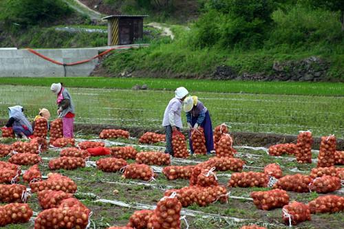 青岛市政策性农业保险实施方案