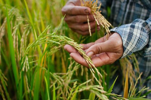 农村土地流转如何保障农民利益