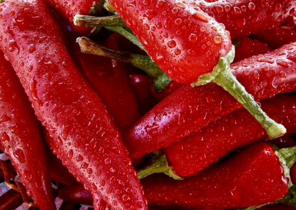 辣椒的種植時間及育苗技術 辣椒高產豐收的措施