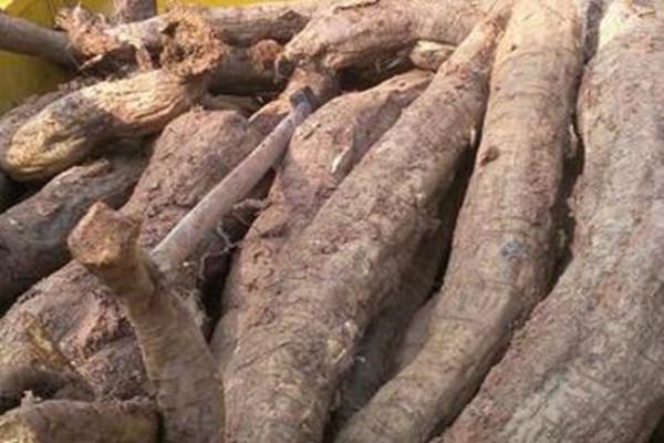 葛根价格多少钱一斤?有哪些功效及作用?葛根种植前景如何?