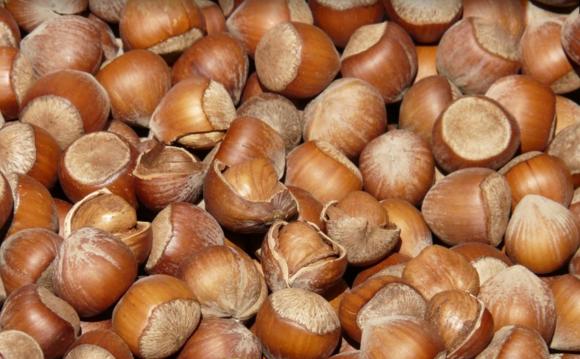 榛子和橡子有什么区别?榛子怎么吃有营养?榛子的几种食用方法