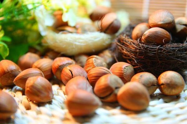 东北榛子多少钱一斤?榛子的营养价值 东北榛子怎么吃?
