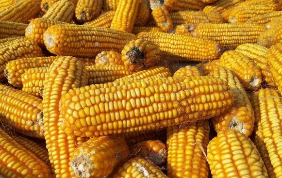 2018年预计很容易赔钱的三种农作物