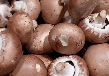农民大棚种植香菇每年净赚三十万?(附种植技术)