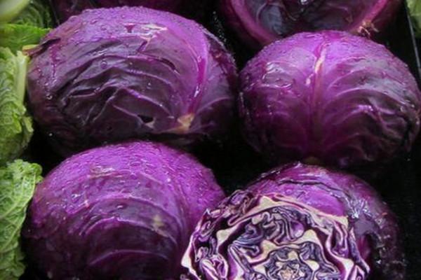 紫包菜可以生吃吗?紫包菜的种植技术 紫包菜有哪些功效及作用?