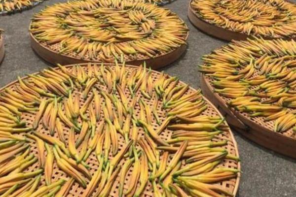 黄花菜一亩地产量多少?怎么种植?有哪些功效