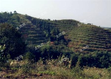 北京:强化农村土地承包经营权确权 规范土地经营权有序流转