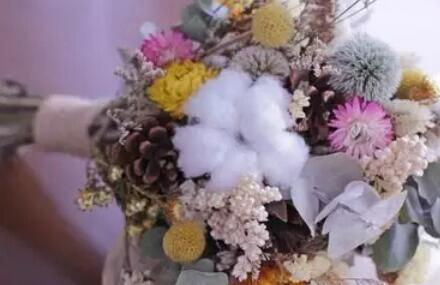 棉花也能当花卖?创意观赏棉花种植前景如何?