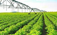 土地流转改革助农业转型升级