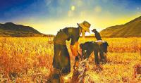 2015年种粮农民补贴多少钱一亩?如何改革农业政策缓解卖粮难?