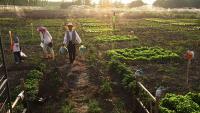2016年,合作社、家庭农场、种粮大户将颁发产权证书!农业补贴再度升级!