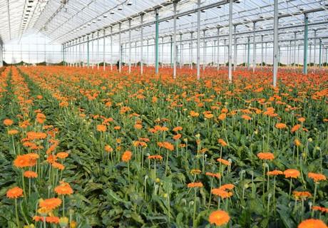 加拿大投资40万美元帮助花农建设环保型农场