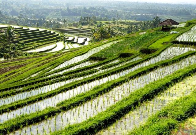老挝农业保险、生产、加工的鼓励或限制政策