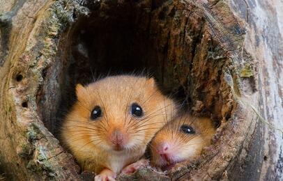 仓鼠可以吃什么食物 水果 蔬菜 仓鼠吃什么东西会死