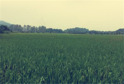 莫斯科人均绿地面积_人均耕面积是指农民