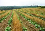 国家农业政策升级背后的三大趋势
