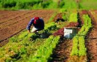 西宁市关于三农问题的政策解读