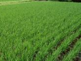 海南省针对三农问题有什么新的举措
