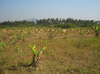 农村集体林地纠纷的实际|农村土地纠纷是要闹