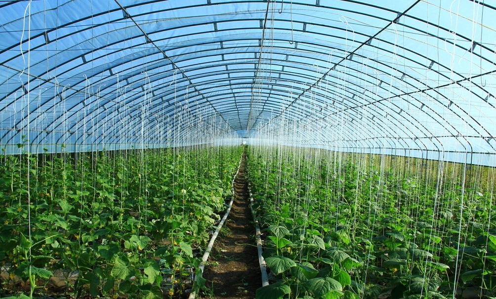 天津静海区改造老旧温室 让蔬菜增产农民增收