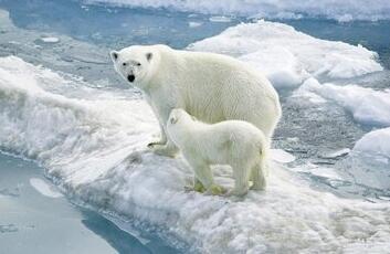 世界上最大的陆地食肉动物北极熊为什么不吃企鹅?