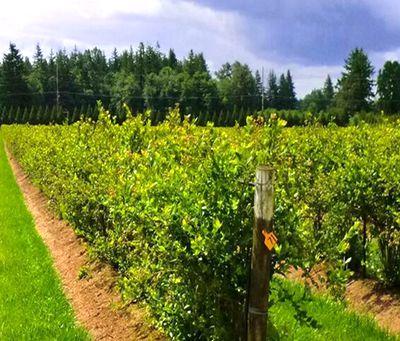 贵州以供给侧改革裂变助推农业转型升级