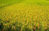 2016年三农问题现状如何?有哪些解决办法和措施?