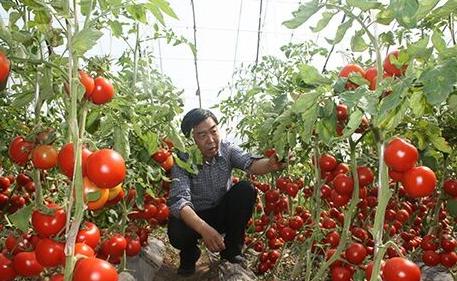"""马新立:正在改写中国农业历史的""""种菜奇人"""""""