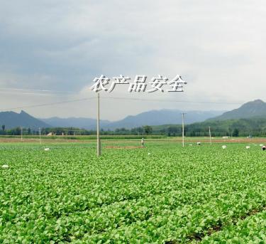山东烟台:专项整治6类农产品安全问题