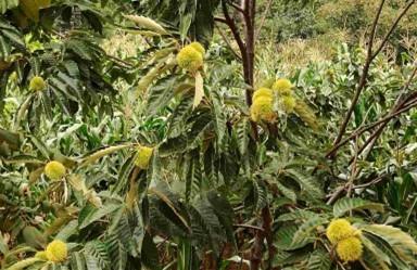 安徽气候和地形适合种植什么果树和特色果树?