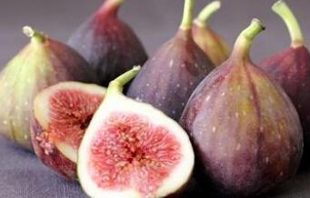 江西气候适合种植什么水果树?