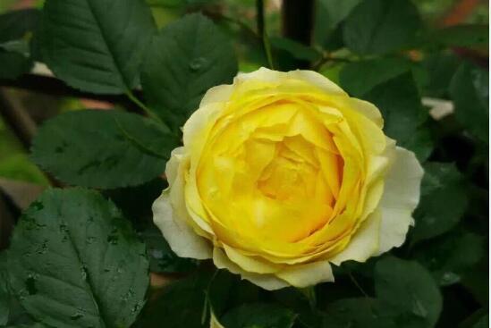 天津市花、市树是什么?