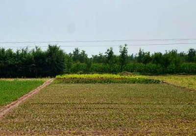 当前湖北省水稻、玉米、棉花田管技术指导意见