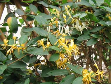 江苏省气候跟地形适合种植什么中药材和水果树?