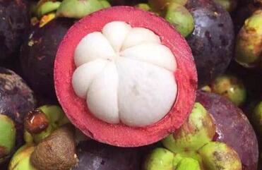 广东地形与气候适合种植什么水果树、中药材和经济作物?