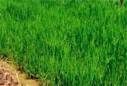 绿色高产高效——引领农业转型升级