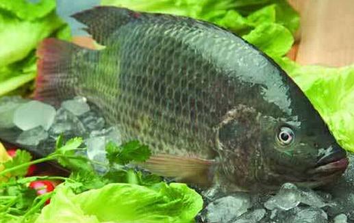 广西地区适合养殖鱼、虾、蟹、黄鳝等水产吗?