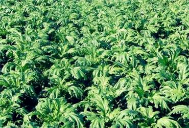 新疆各地区主要农作物