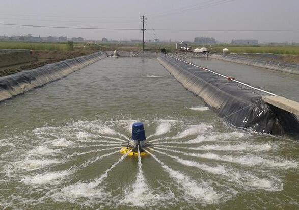 福建农村地区适合什么水产养殖?
