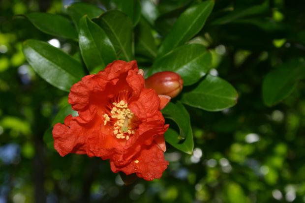 黄石市树、市花是什么?